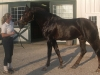 feuri-barn-550