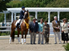Freedom-stallion-champion