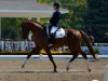 freedom-stallion-2